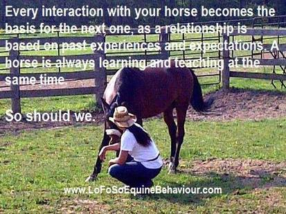 Horse Behavior, Horsemanship, Horse Facts, Horse Tips, Horse Training, Horse Welfare, Horse Information, Horse Care